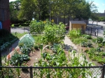 """East Boston youth maintain """"Nuestra Jardin"""" community garden every Spring and Summer."""